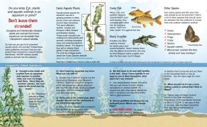 Screenshot of Exotic Aquatics Brochure