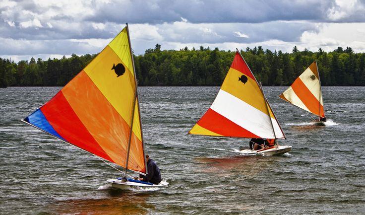 Sunfish sailboats racing on a lake